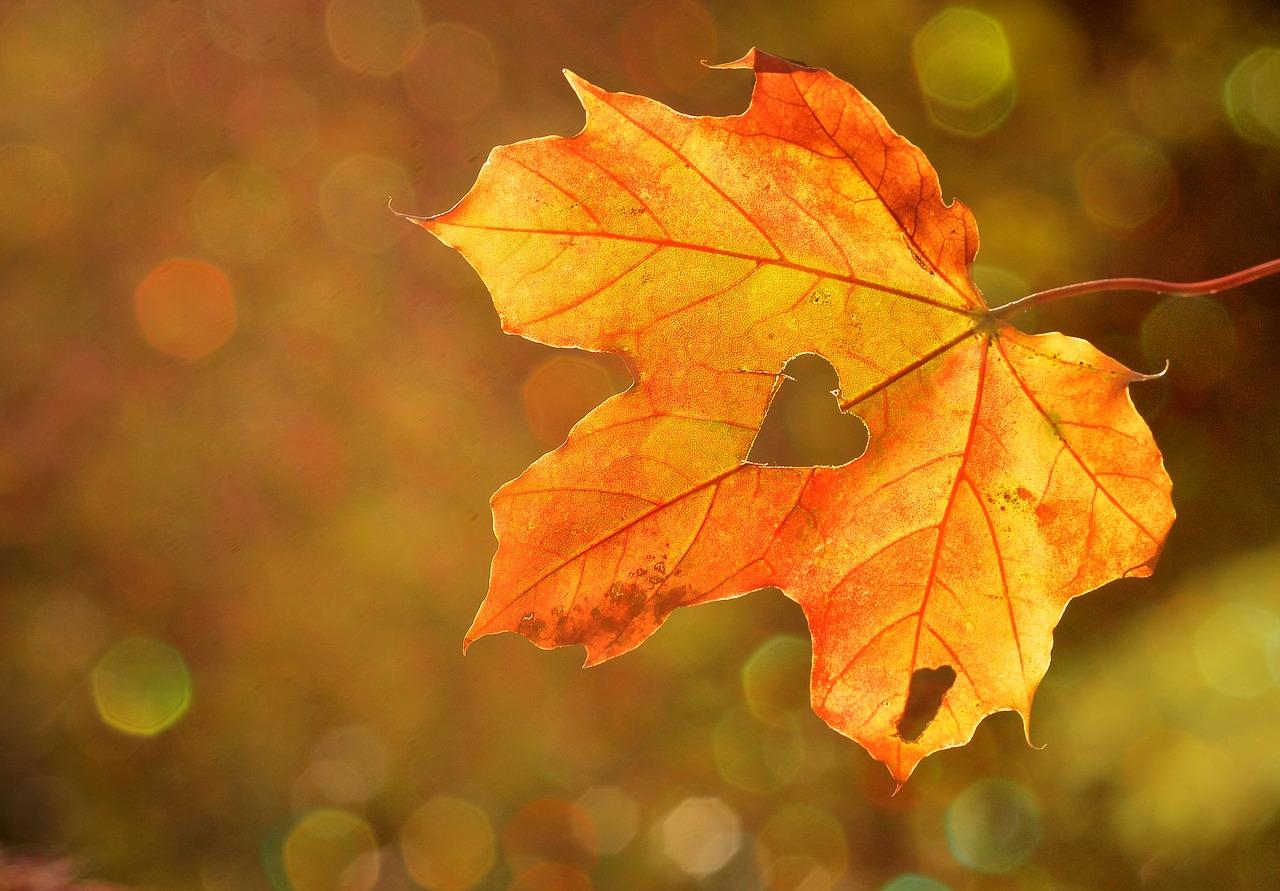 otoño-lluna-black-friday-mujer